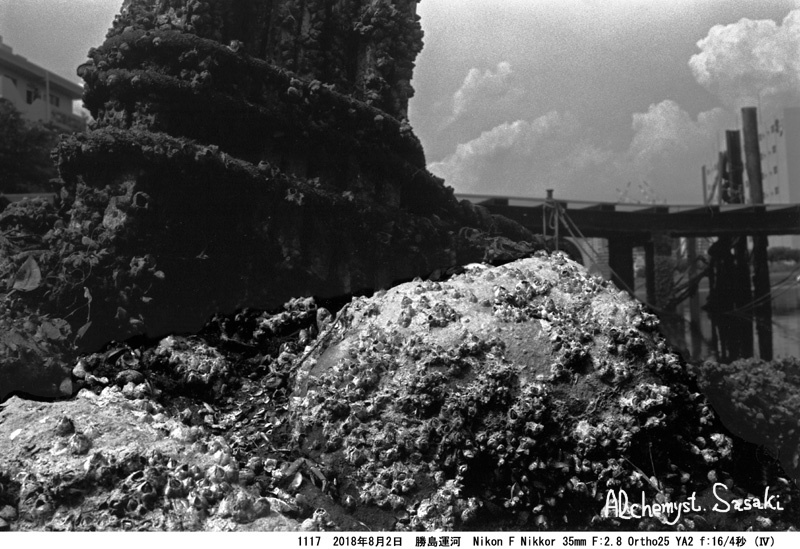 勝島運河1117-13