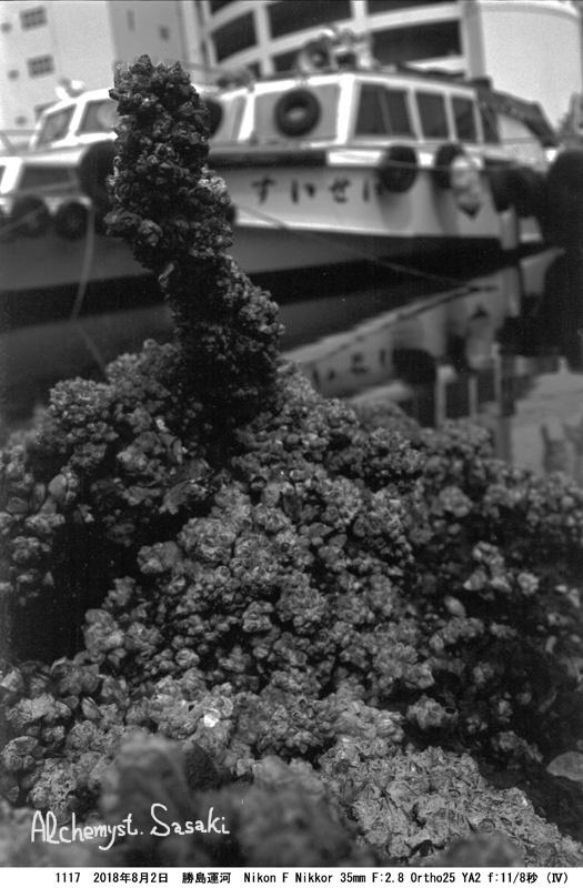 勝島運河1117-26