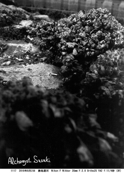勝島運河1117-39