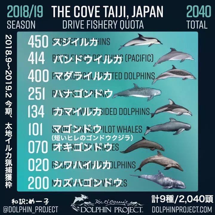 2018irukahokakuwaku.jpg
