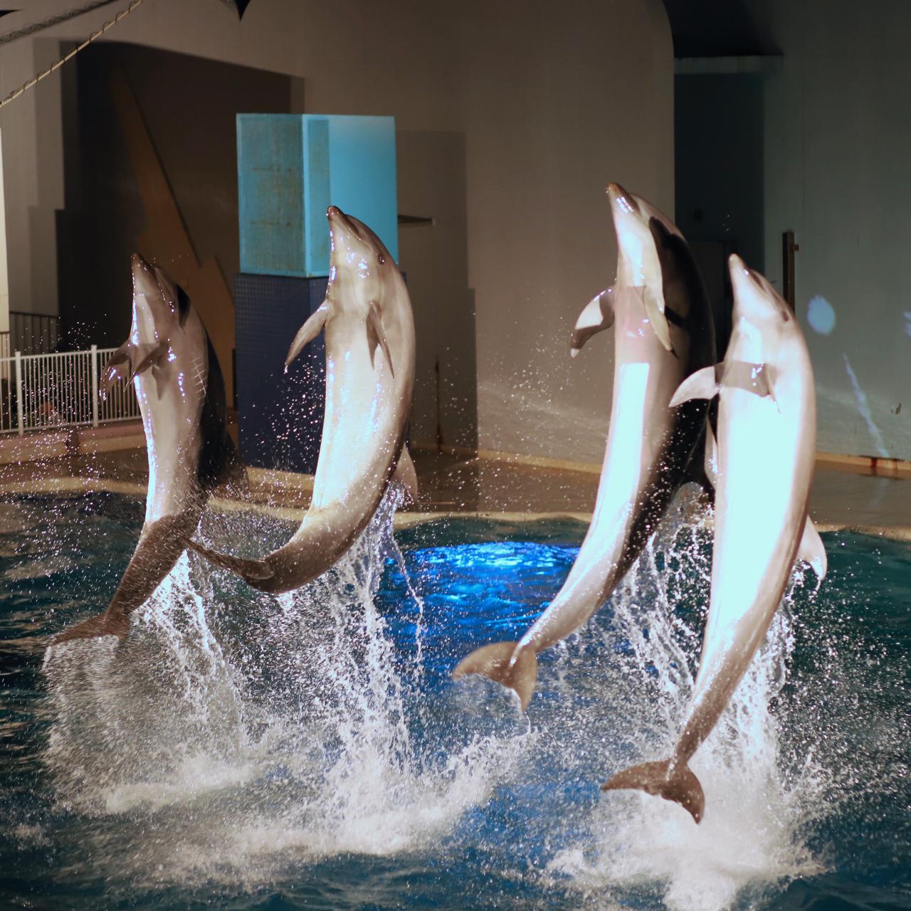 イルカ4ジャンプ