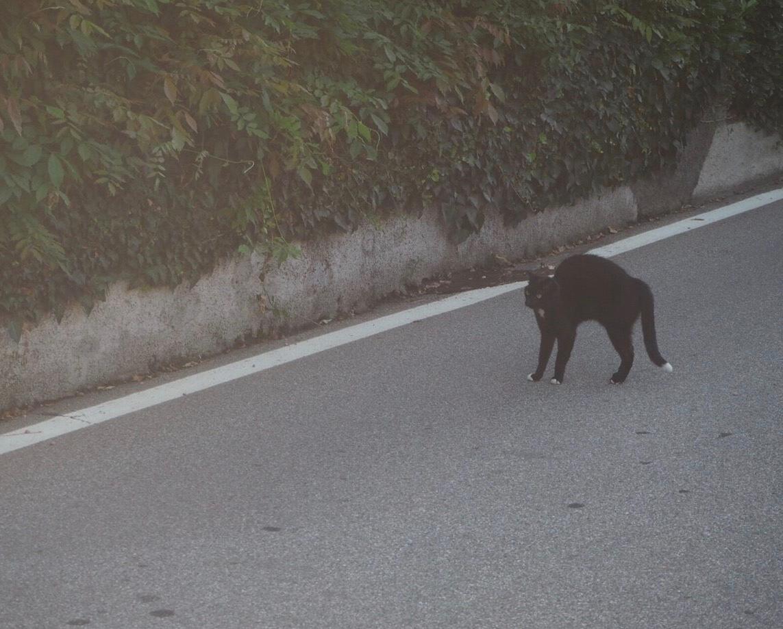 遊びに誘う黒猫