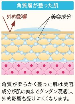 角質層が整った肌