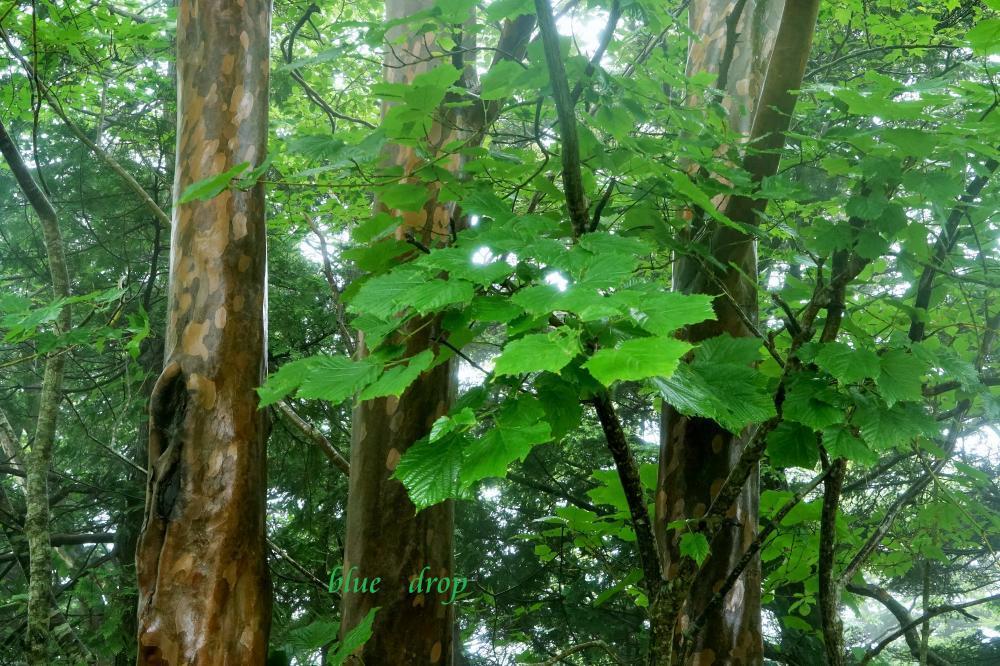 濡れる森*