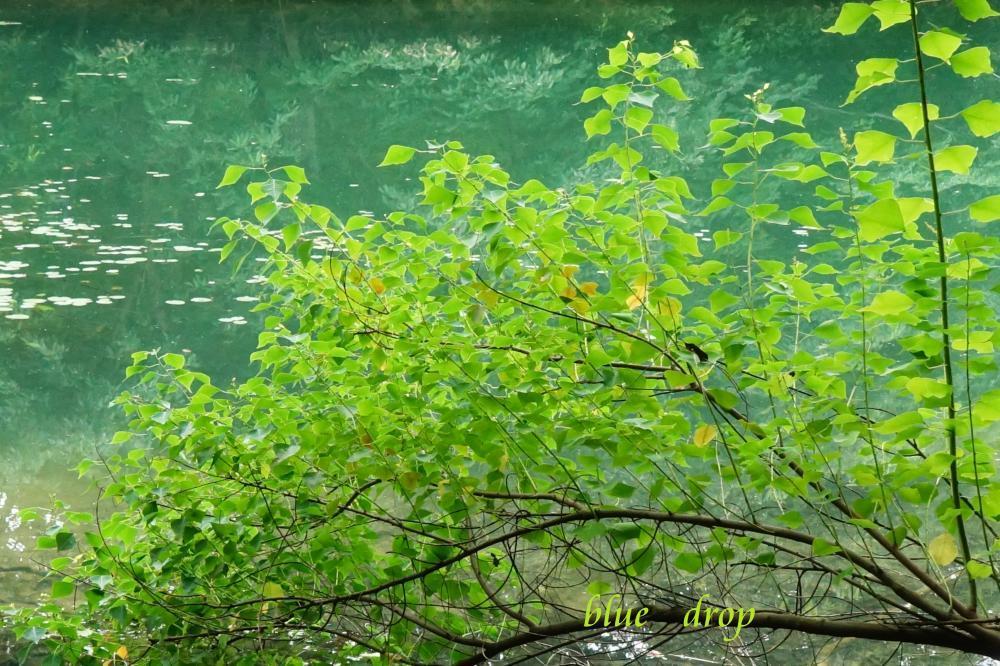 Greenのグラデェーション*