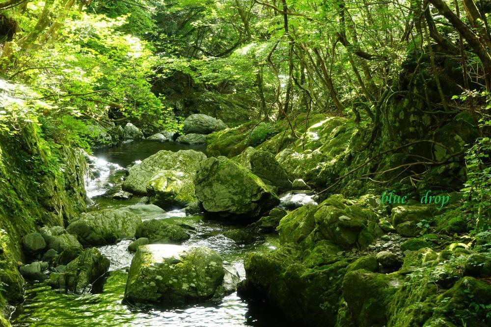 緑の渓流*