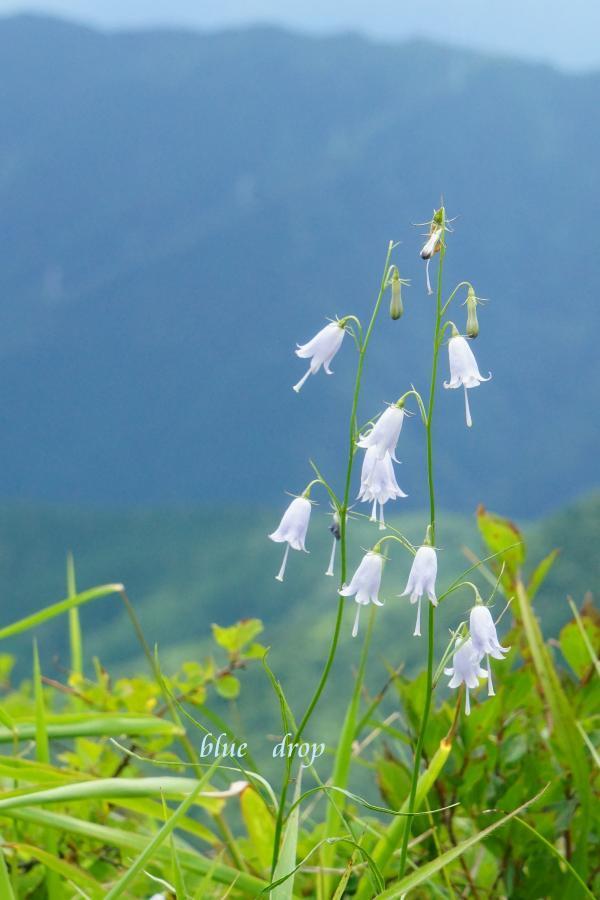 揺れる花*