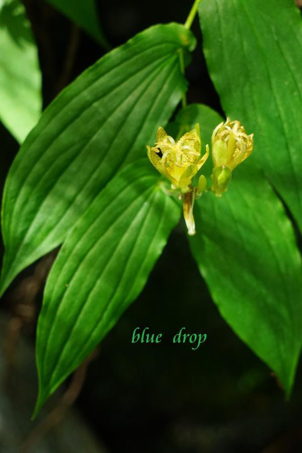 黄色い花*