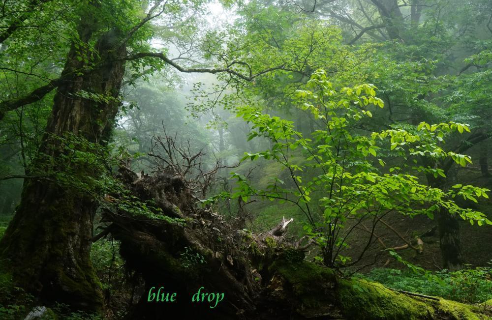 生命の森*