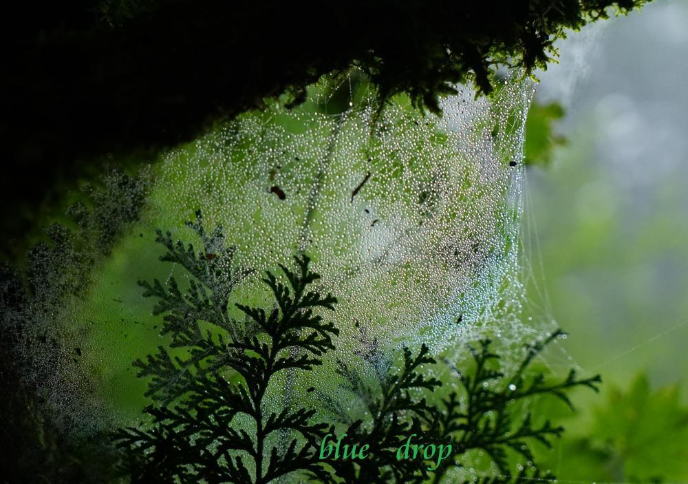 七色の蜘蛛の巣*