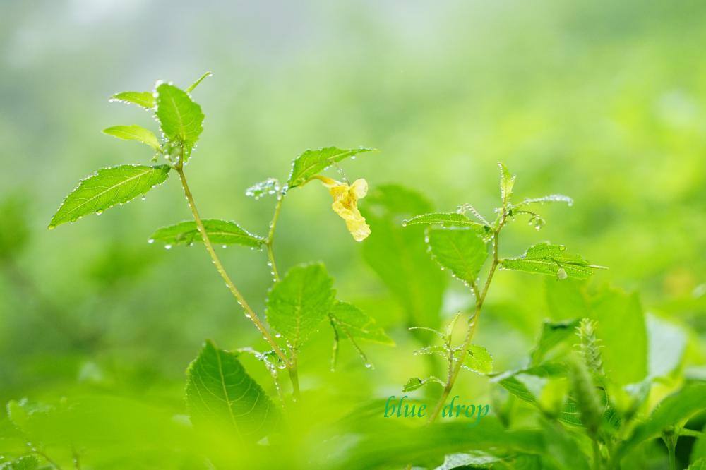 水滴の花*