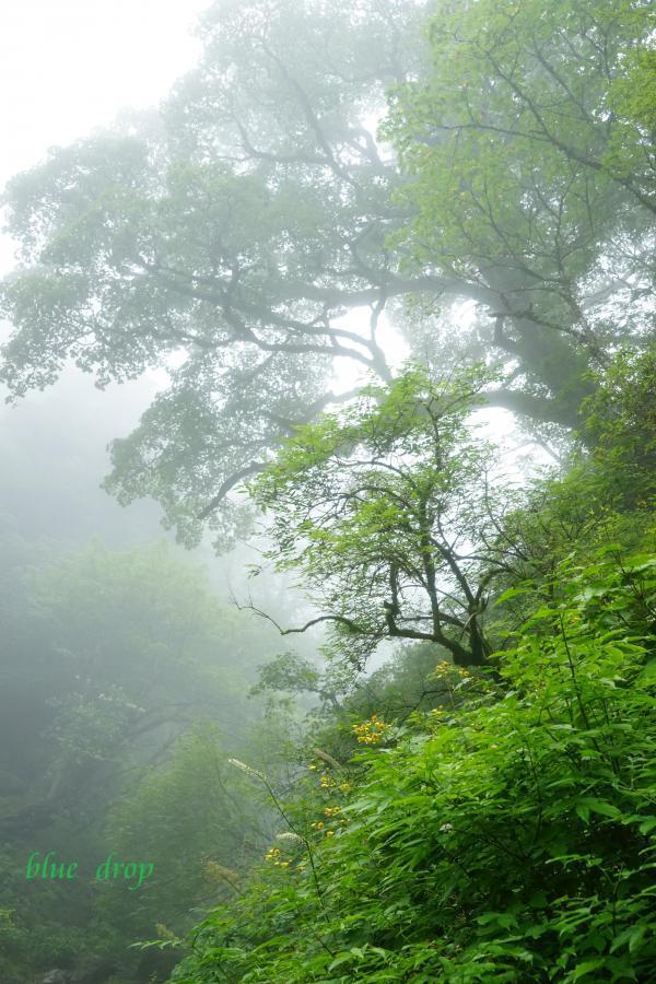 霧が流れる*