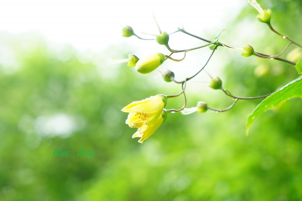 天涯の花*