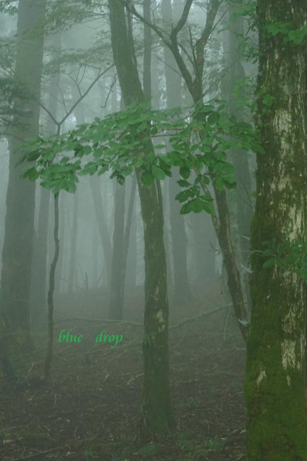 霧の奥に*