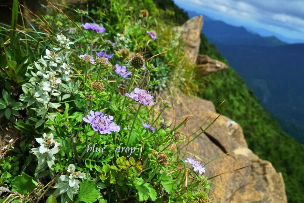 高嶺の花々*