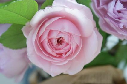 180502薔薇5