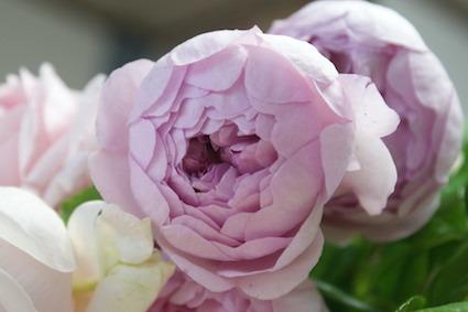 180502薔薇6