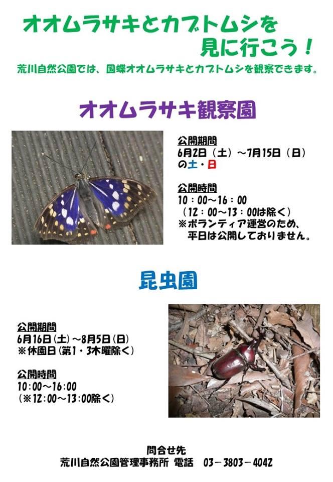オオムラサキ・カブトムシ