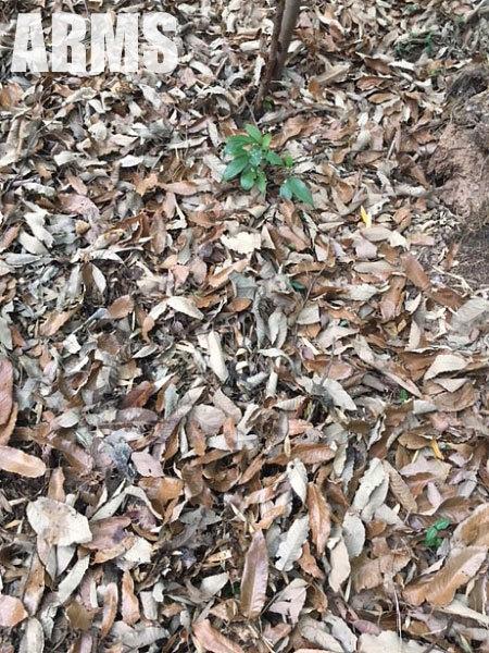 タケノコの見つけ方 タケノコ掘り