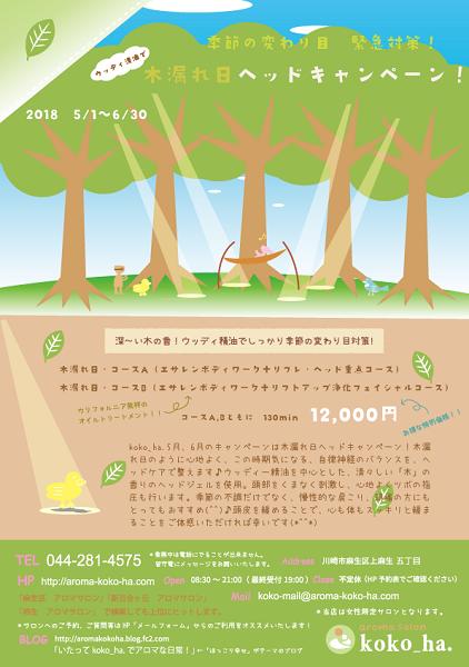 木漏れ日ヘッドキャンペーン!