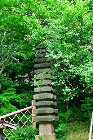 DSC_椿山4021_01