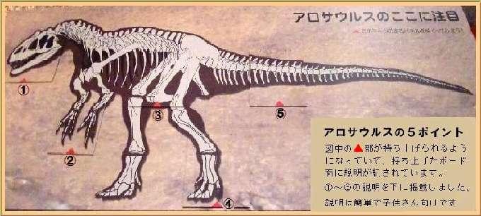 アロサウルスの説明1