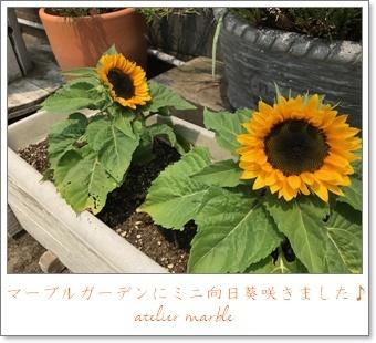 ミニ向日葵 可愛い