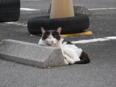 cat-029.jpg