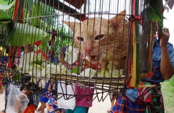 Cat parade (5)