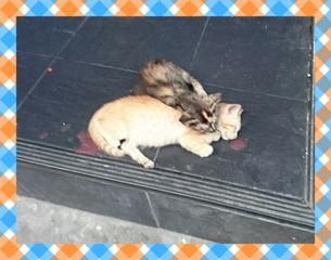 kitten_20180805091833034.jpg