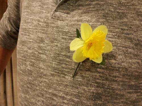 Daffodil Day3