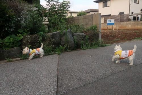 atuinohawakarugayosomonokuruna1.jpg