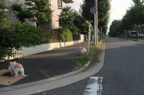 atuinohawakarugayosomonokuruna3.jpg