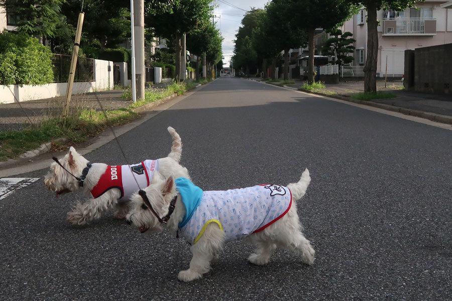 chokyodaikennibibitawakehanani3.jpg