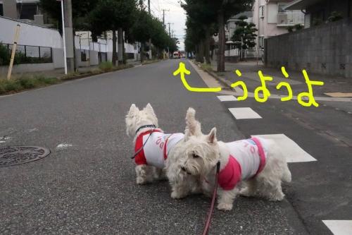 shoboukyukyupatcarkarasude4.jpg