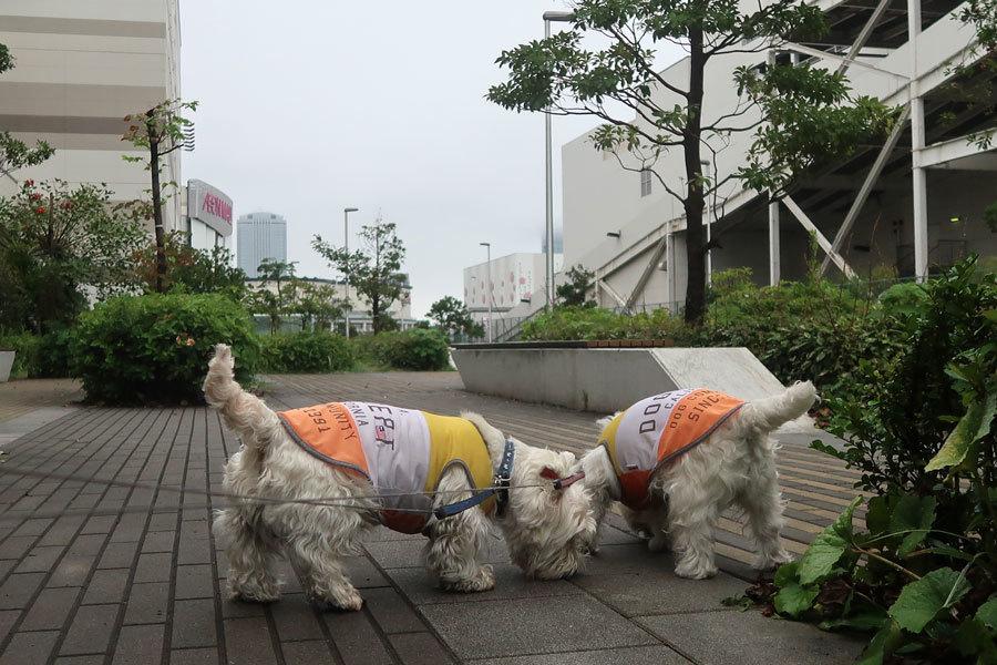 taifutoorisugitanoniamegayamanai4.jpg
