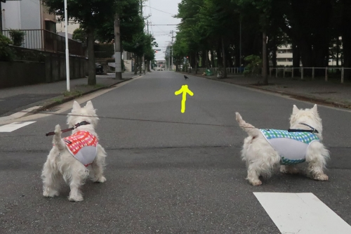 tanukininekonikarasugaitayo3.jpg