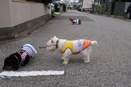 uchinokotachihahiroiguisinaikarane1.jpg