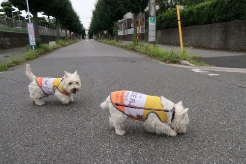 uchinokotachihahiroiguisinaikarane3.jpg