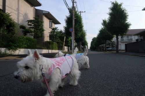 yonakadakedoshaburitteiiyone3.jpg