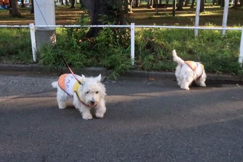 yononakayasumigaooikakunkunnaga1.jpg