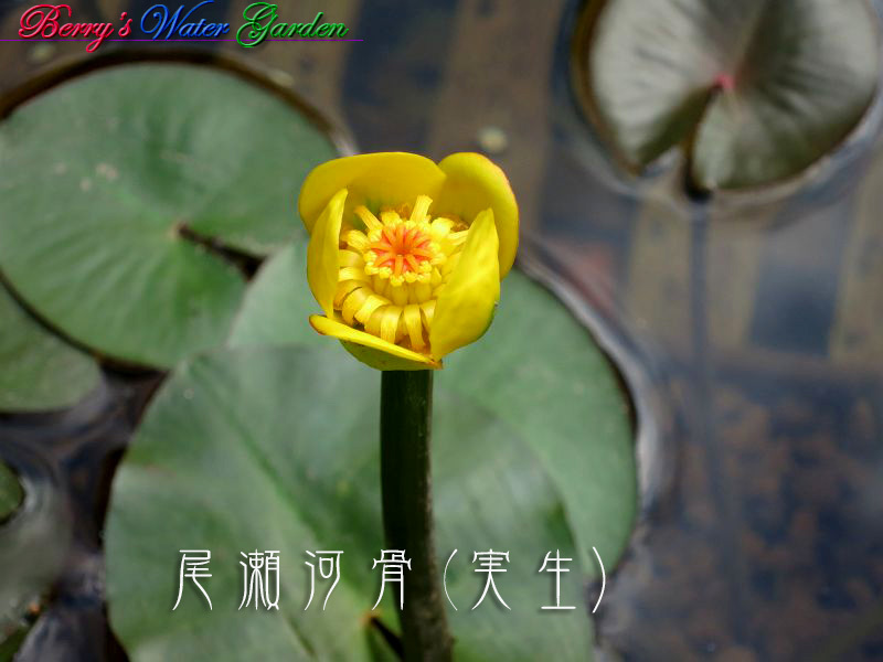 IMG_9949_800 のコピー
