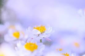 flower20180818a.jpg