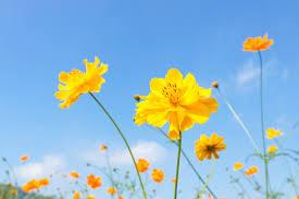flower20180818c.jpg