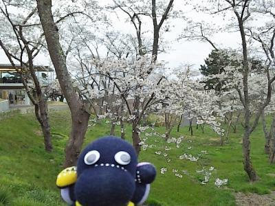 西行戻しの桜