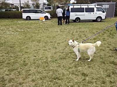 狂犬病注射