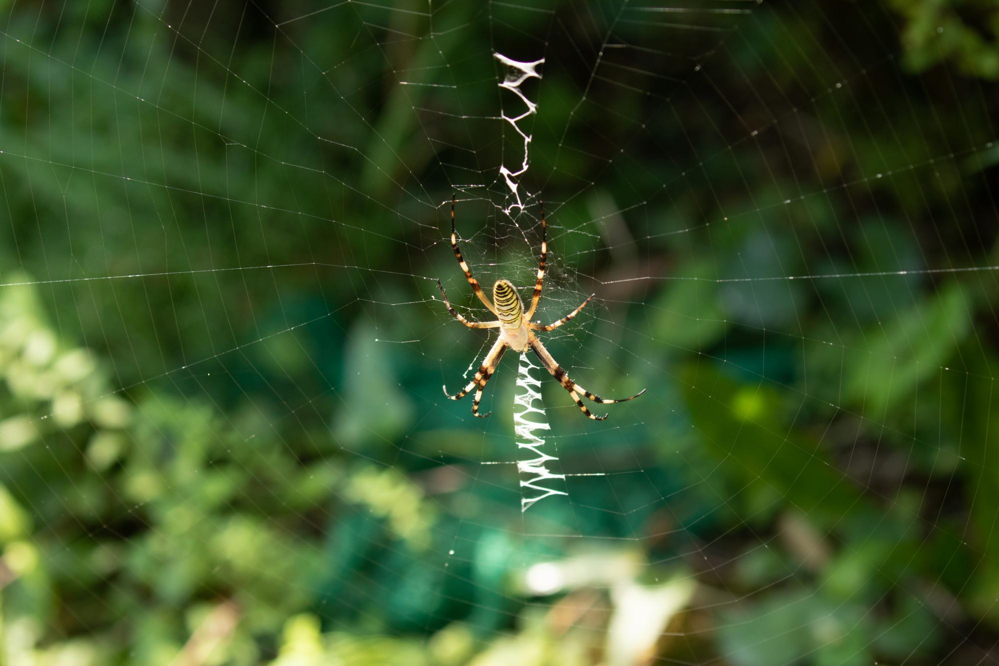 20180802-蜘蛛