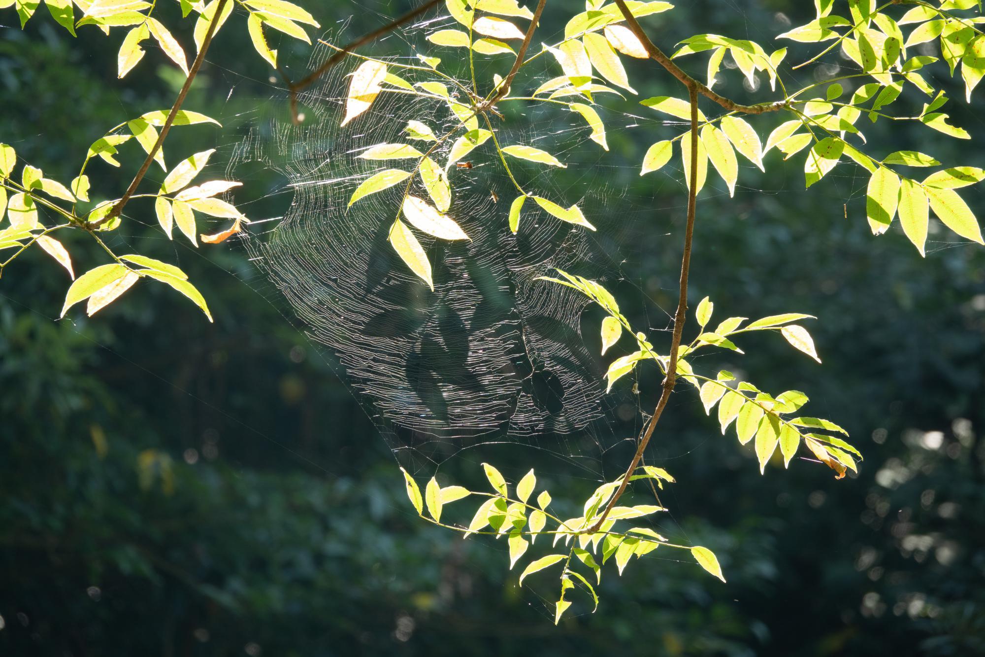 20180827-蜘蛛の巣