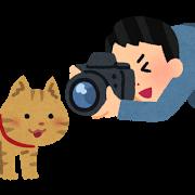 ネコ(写真を撮る