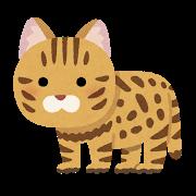 ネコ(クロアシ